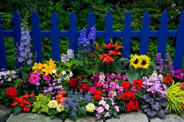 Какие цветы сажают на даче?