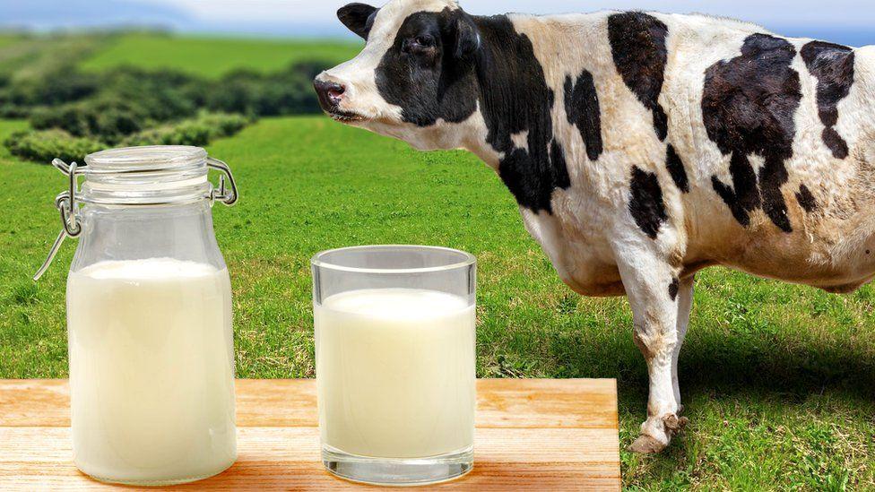 Можно ли молоко на ночь при похудении